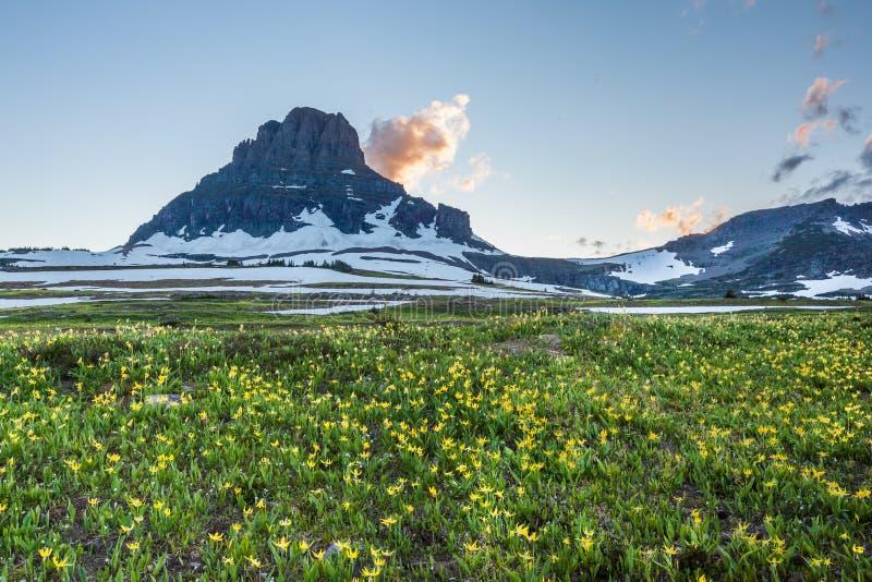 在摇石通行证,冰川全国P的野花领域 免版税库存图片