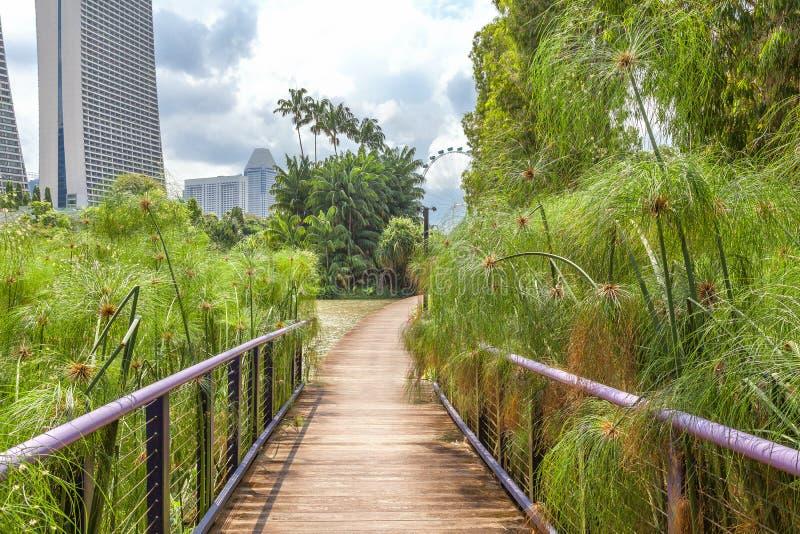 在摩天大楼中的一个庭院在新加坡的中心 免版税图库摄影