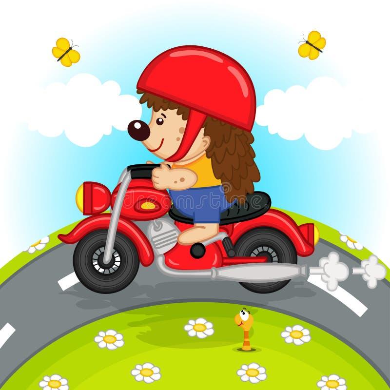 在摩托车乘驾的猬在路 库存例证
