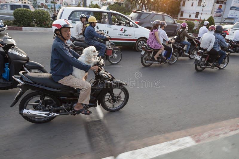 在摩托车的狗 库存图片