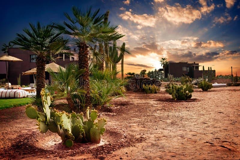 绿洲在摩洛哥 库存图片