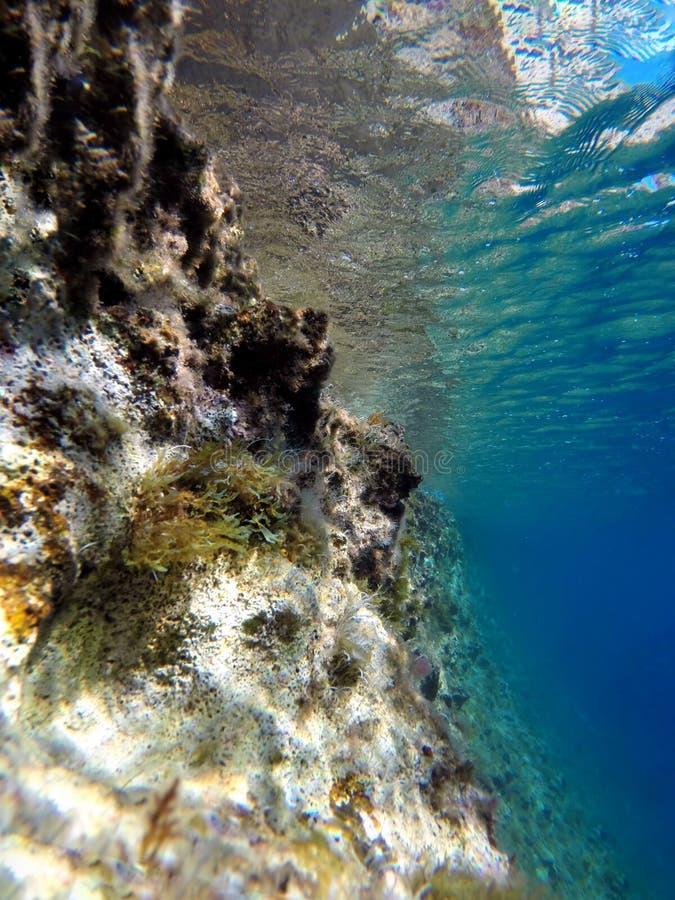 在撒丁岛海岸的水中 库存图片