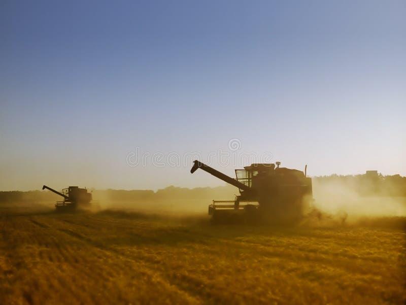 在收获成熟金黄麦子的组合的光 免版税图库摄影