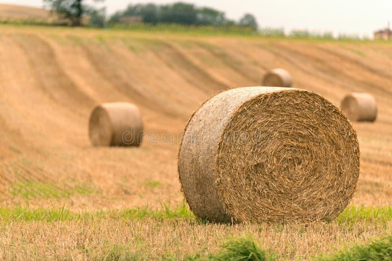 在收获领域的干草捆 免版税库存图片