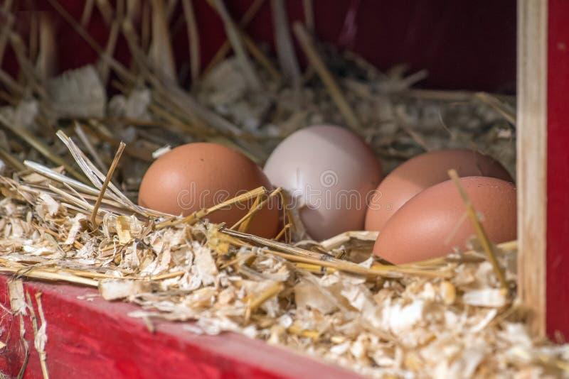 在放置的巢的鸡蛋 图库摄影