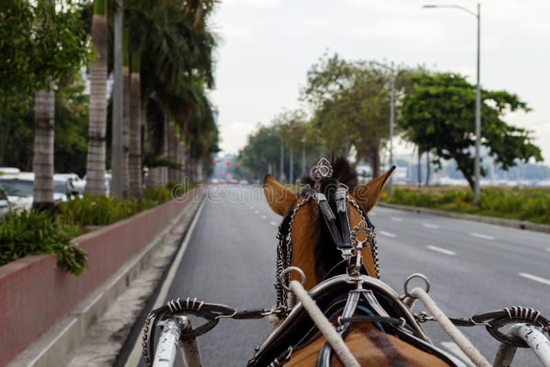在教练鞔具的布朗马在海滨城市空的街道上  有马的葡萄酒教练 库存照片