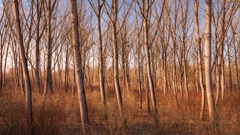 在文件的柳树在干燥期间在冬天温暖口气 免版税库存照片