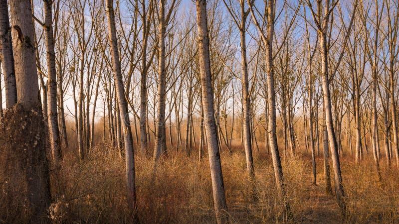 在文件的柳树在干燥期间在冬天温暖口气 库存照片