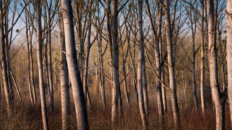 在文件durin的柳树每干燥期间在冬天 图库摄影