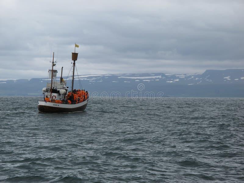 在斯乔尔万迪湾海湾的一个古老捕鲸船航行在近冰岛北部到寻找鲸鱼的胡萨维克 库存照片