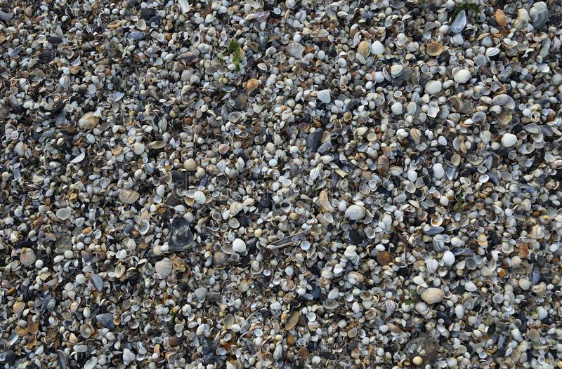 在斯旺西海湾,南威尔斯,英国的海壳 库存图片