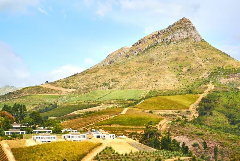 在斯泰伦博斯谷南非的葡萄园山 库存照片