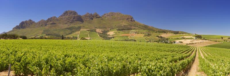 在斯泰伦博斯附近的葡萄园在南非 免版税库存图片