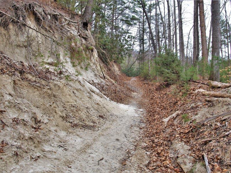 在斯通山国家公园的供徒步旅行的小道 免版税库存照片