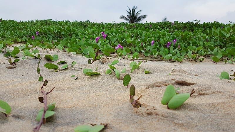 在斯里兰卡的北部的海滩 免版税库存照片