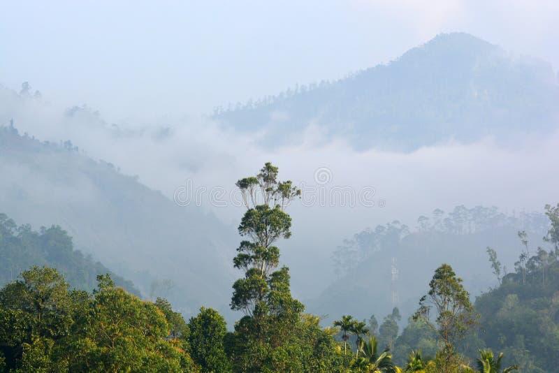 在斯里兰卡的山的中早晨有薄雾的黎明 免版税库存图片