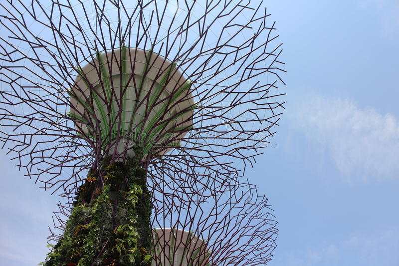 在新加坡海湾庭院的Supertree凹线 库存图片