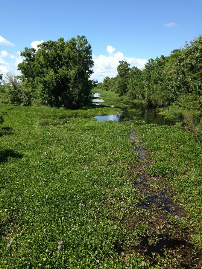 在新奥尔良之外的绿色被日光照射了沼泽 免版税库存图片
