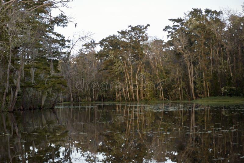 在新奥尔良沼泽附近的路易斯安那 库存照片
