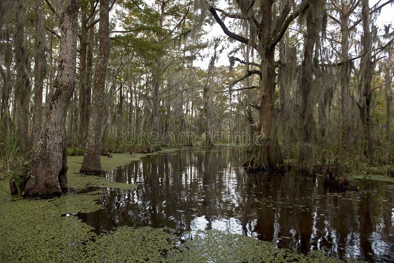 在新奥尔良沼泽附近的路易斯安那 库存图片