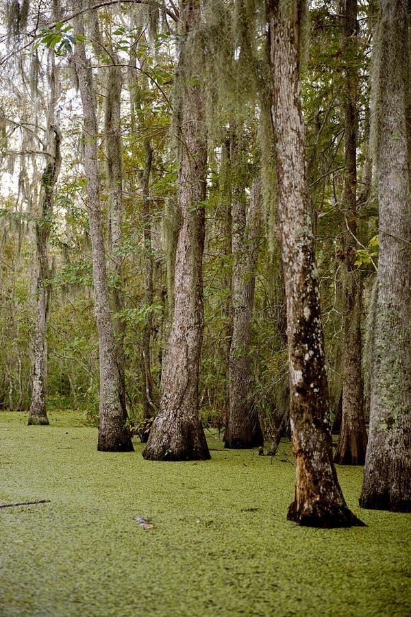 在新奥尔良沼泽附近的路易斯安那 免版税库存照片
