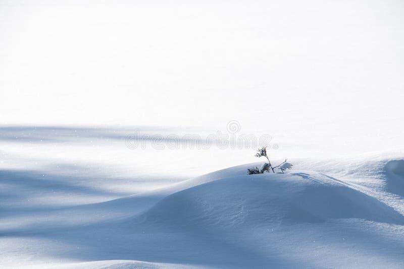 在新的雪的小树枝 库存照片
