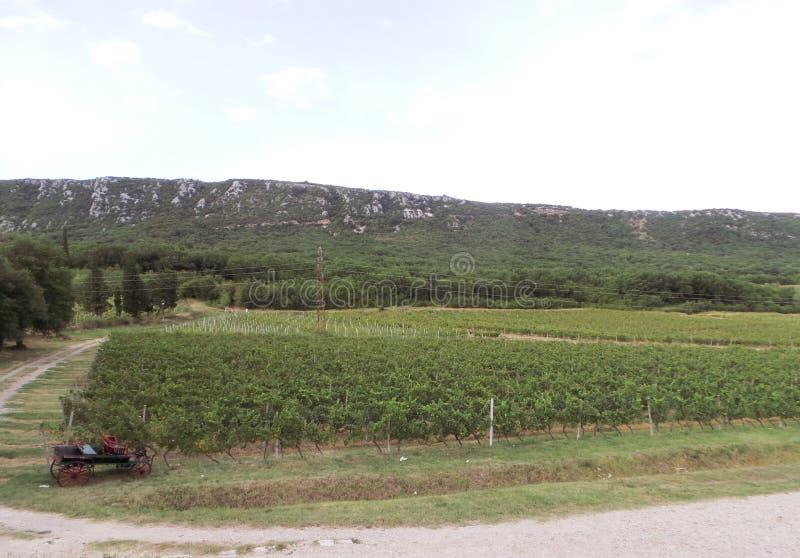 在新维诺多尔斯基克罗地亚附近的葡萄园风景 库存图片
