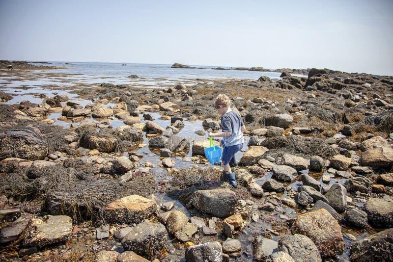 在新罕布什尔海岸的男孩探索的浪潮水池 库存照片