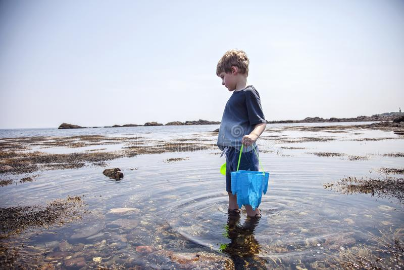 在新罕布什尔海岸的男孩探索的浪潮水池 免版税库存图片
