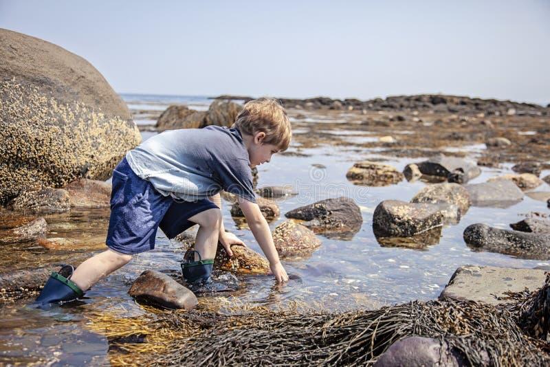 在新罕布什尔海岸的男孩探索的浪潮水池 免版税库存照片
