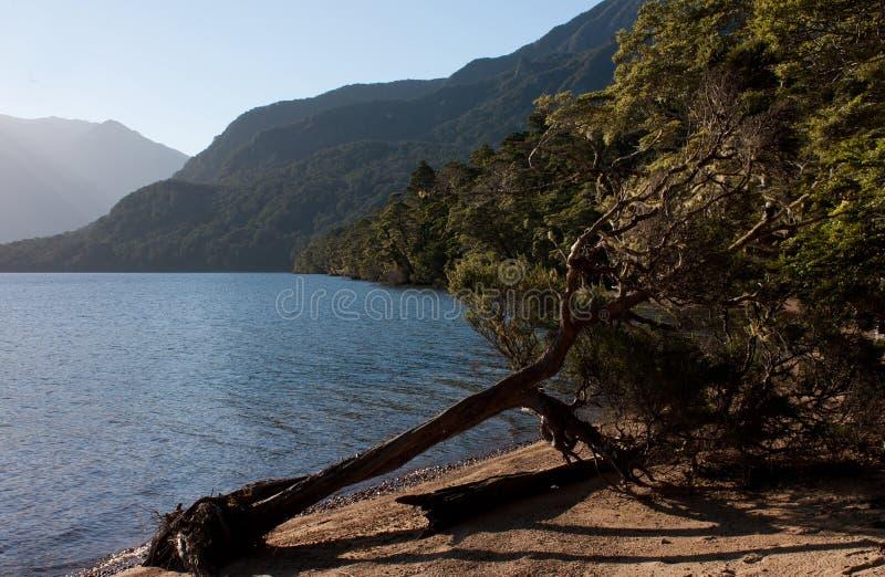 在新西兰& x27的岸的一棵下落的树;s最深的湖,豪罗科湖在南方 库存照片