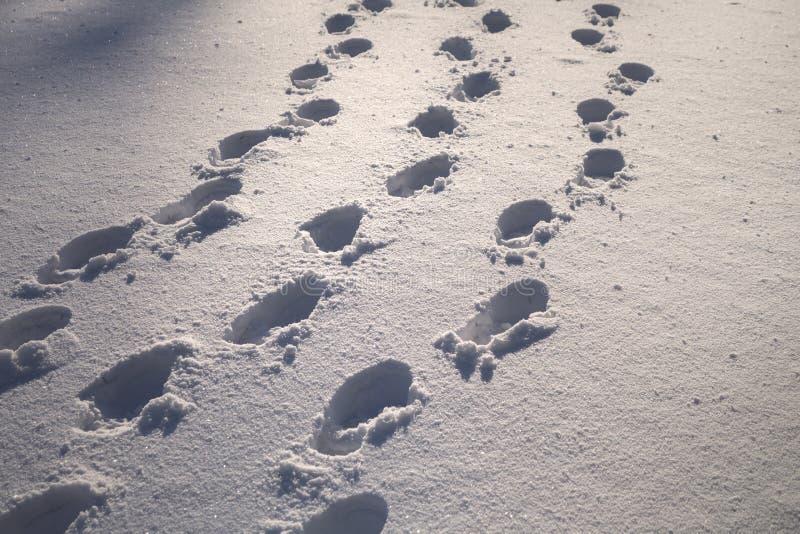 在新鲜的雪的晴朗的鞋子印刷品 免版税库存照片
