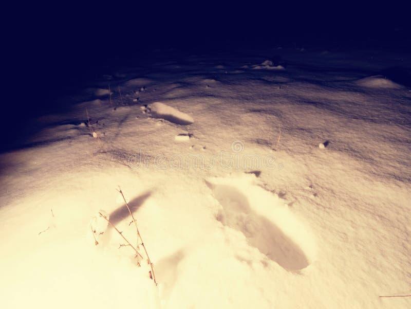 在新鲜的雪的脚印在消失在黑暗的夜之前 免版税图库摄影
