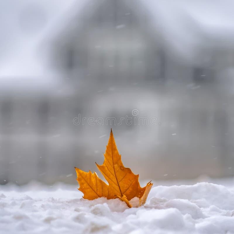 在新鲜的雪顶部的被日光照射了金黄叶子在冬天 免版税库存图片