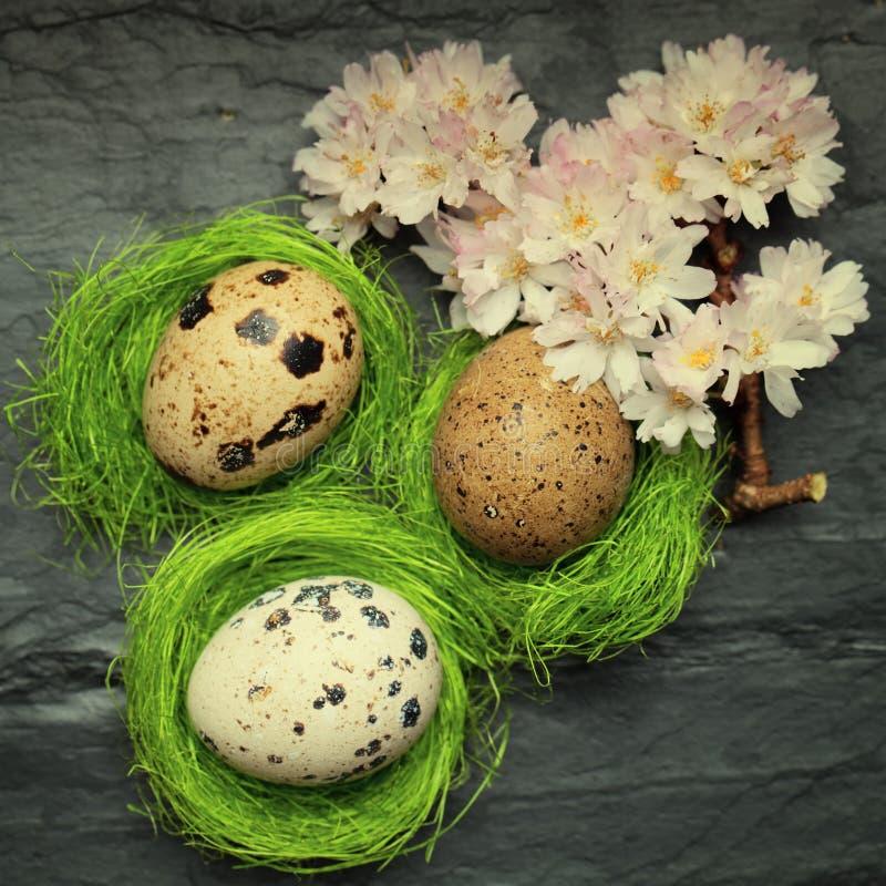 在旁边微小的绿色巢的三个小鹌鹑蛋与放松fl 免版税库存照片
