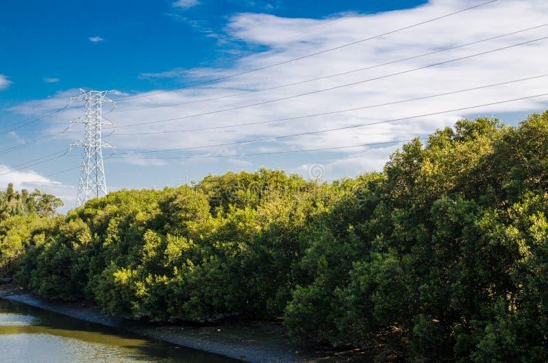 在旁边美丽的河与绿色美洲红树森林和输电线塔 免版税库存图片