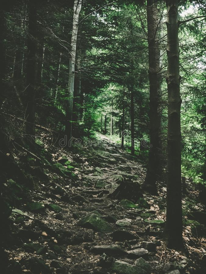 在旅游足迹的石道路 免版税库存照片