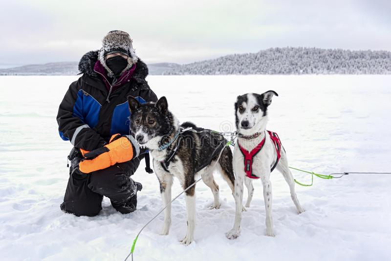 在旅游雪撬乘驾以后预兆宠爱多壳的狗 免版税图库摄影