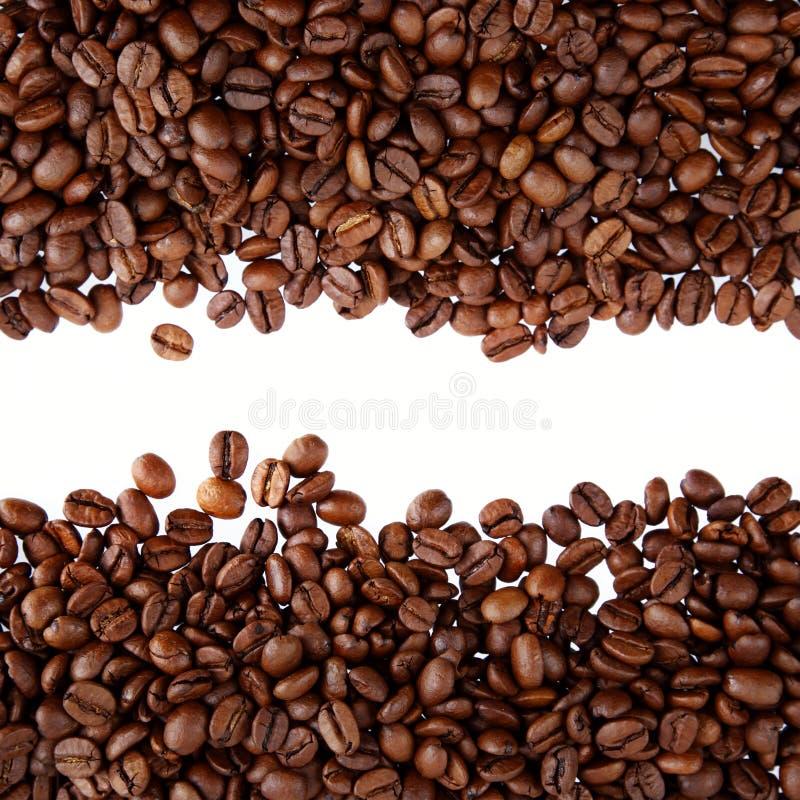 在无格式背景的咖啡豆 库存图片