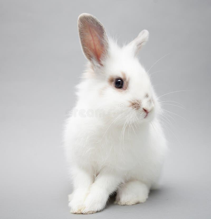 在无缝的轻的背景的逗人喜爱的白色婴孩小兔 免版税库存图片