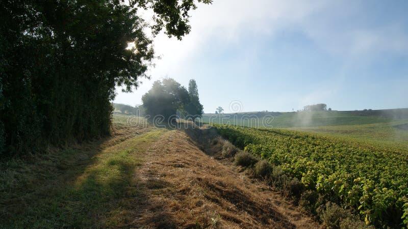 在日出早晨轨道低谷的有雾的早晨向日葵的领域 Miradoux, Lectoure 在Frnace南部 免版税库存照片