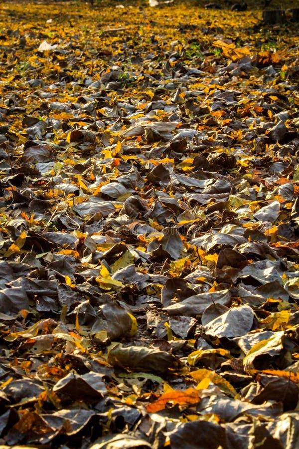 在日出时的干燥叶子 库存照片