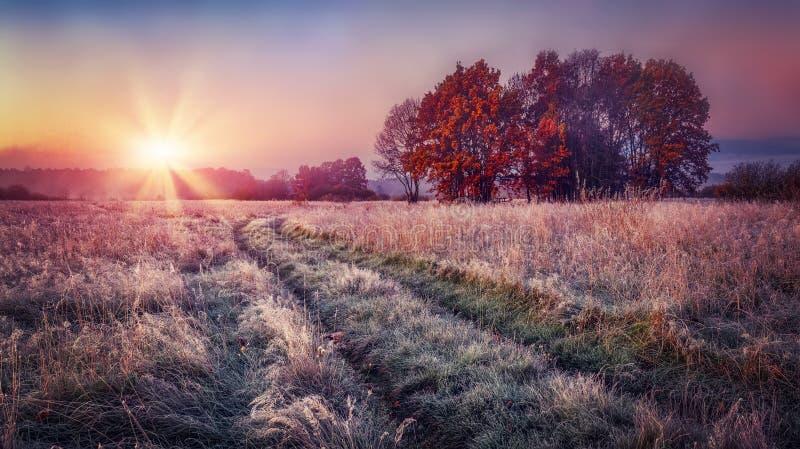 在日出的冷淡的秋天风景在草甸 与树冰的五颜六色的风景秋天在草和明亮的太阳在天际 秋天 图库摄影