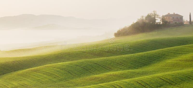 在日出的托斯卡纳风景 典型为区域托斯坎农舍,小山,葡萄园 意大利新绿色托斯卡纳风景 免版税库存照片