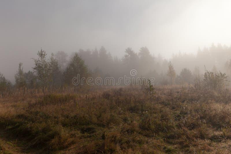 在日出的早晨雾在木头。 秋天横向 免版税库存照片