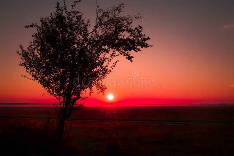 在日出的树 免版税库存图片