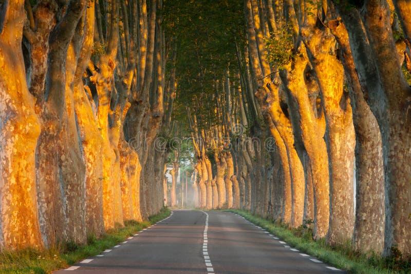 在日出的沿途有树的大道,普罗旺斯,法国 免版税库存图片