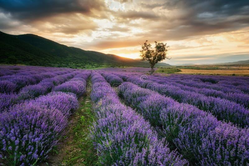 在日出的淡紫色领域 库存图片