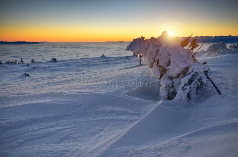 在日出的积雪的树在Tatra山 库存图片