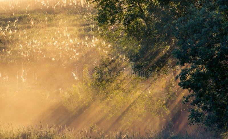 在日出的美丽的自然薄雾 库存照片